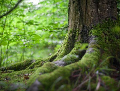 Baum in Wald