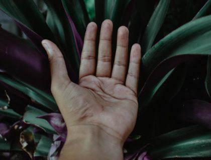 Hand über Pflanze, Symbolbild für Nachhaltigkeit