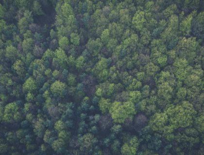 Viele Bäume