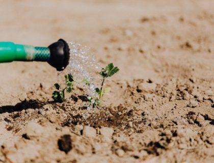 Pflanze wird gegossen