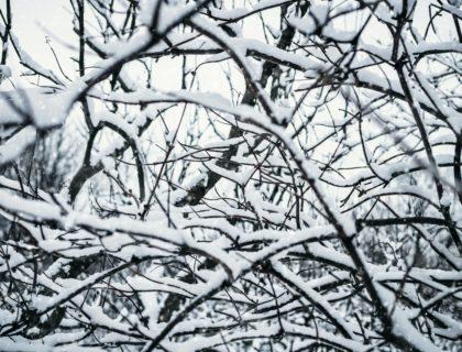 Gebüsch & Schnee